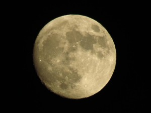 Contrary Moon