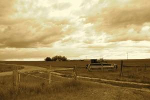 Wilkins Farm